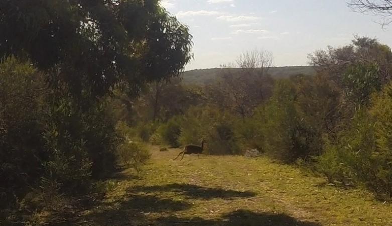 Deer feature