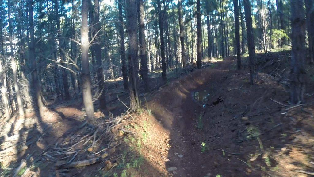 Majura Pines, ACT
