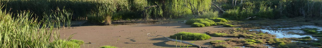 Jerrabomberra Wetlands, ACT
