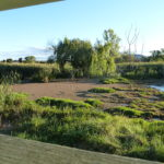 Jerrabomberra Wetlands, ACT