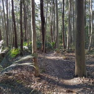 Nowra MTB Trails